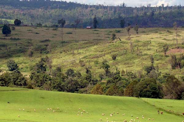 How You Can Monetize Idle Land in Kenya