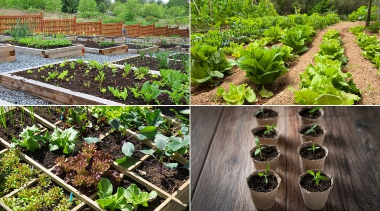 How to Come Up With a Simple Vegetable Garden