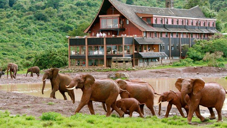 The Ark Lodge: The Hidden Gem in Kenya